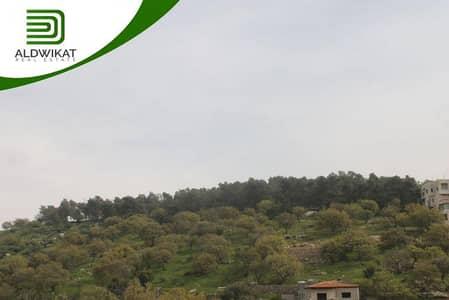 ارض زراعية  للبيع في بدر الجديدة، عمان - أرض زراعية للبيع في بدر الجديدة