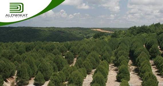 ارض سكنية  للبيع في بدر الجديدة، عمان - ارض مميزة للبيع في بدر الجديدة | 958 م2