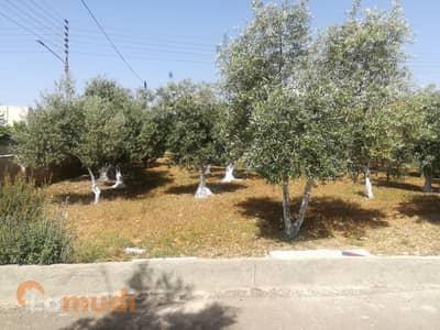 ارض تجارية  للبيع في ناعور، عمان - Photo