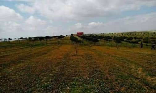 Residential Land for Sale in Dhiban, Madaba - Photo