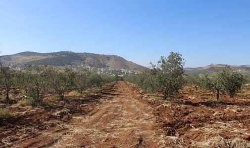 مزرعة  للبيع في أبو نصير، عمان - Photo