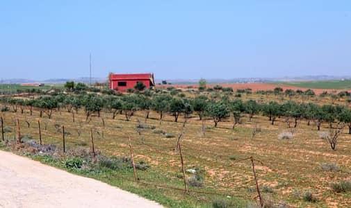 ارض زراعية  للبيع في مادبا - Photo