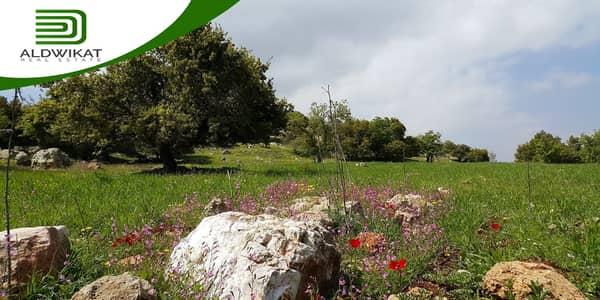 ارض سكنية  للبيع في ناعور، عمان - ارض للبيع في ناعور بمساحة 8 دونم