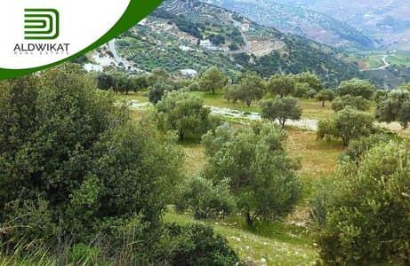 ارض سكنية  للبيع في صافوط، السلط - أرض للبيع في منطقة صافوط بمساحة 1038 م