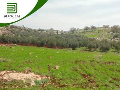 Residential Land for Sale in Bader Al Jadidah, Amman - ارض للبيع في بدر الجديدة المساحة 750 م