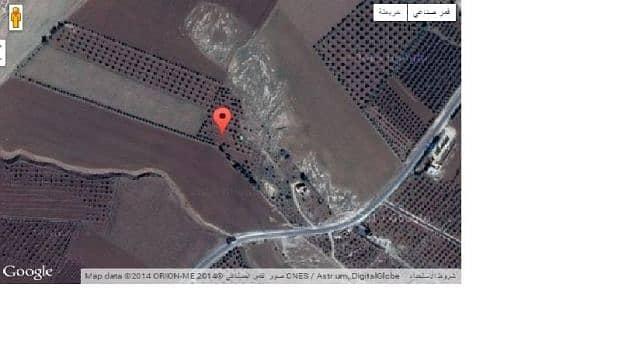 مزرعه للبيع في مادبا مساحة الارض 28 دنم