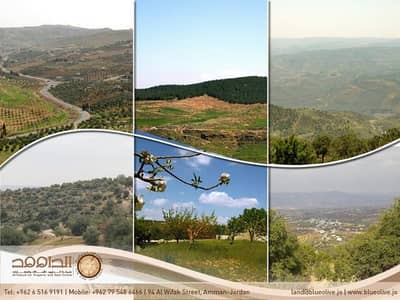Residential Land for Sale in Ajloun - Photo